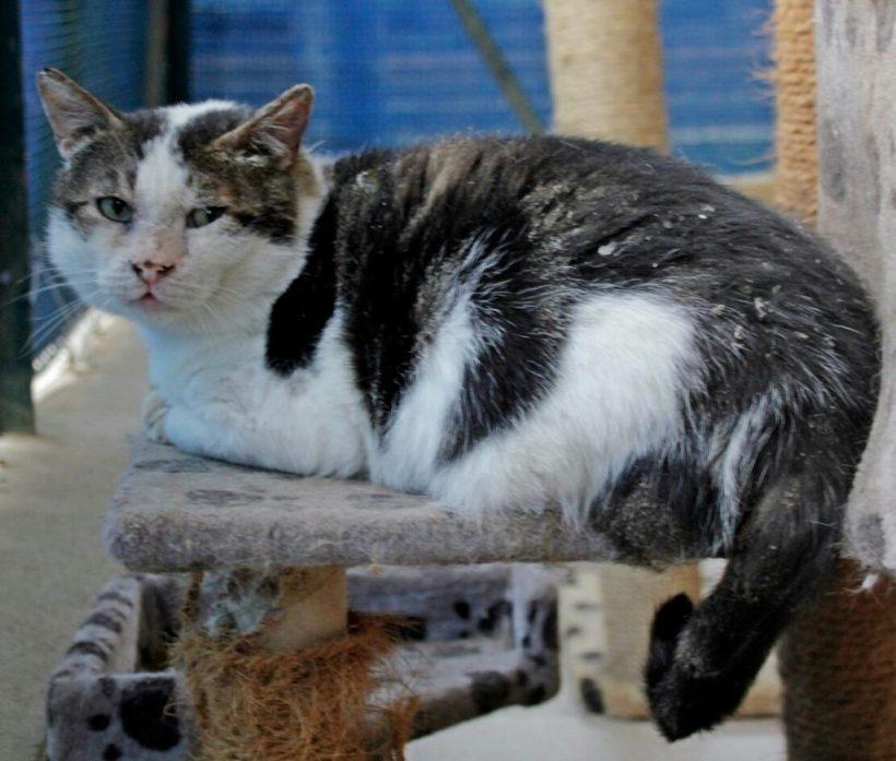 Insufficienza renale nel gatto