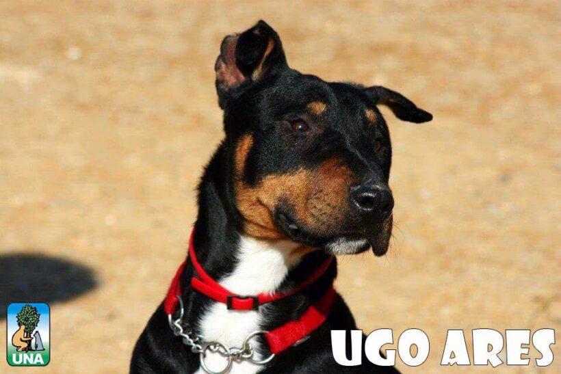 Ugo Ares